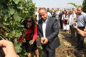 Nesër hapet Festivali i Rrushit në Rahovec