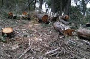 Gjykatat amnistojnë dëmtuesit e pyjeve në Prizren