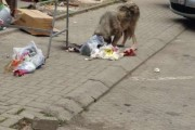 Eliminimi i një qeni endacak në Prizren 81 euro