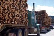 Arrestohet për transportim ilegal drurësh në Suharekë