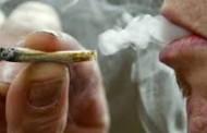 Policia i gjen marihuanë, arrestohet burri nga Prizreni