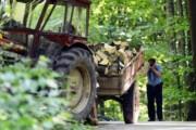 Dënohet me 150 euro gjobë i akuzuari që pranoi fajësinë për vjedhje pylli në Dragash