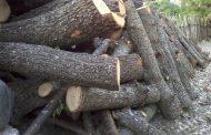 Haradinaj: Do të bashkëpunojmë ngushtë me përpunuesit e drurit