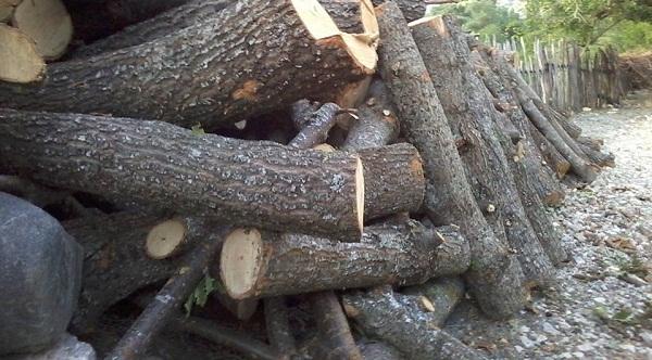 Malishevë /Dënohet i akuzuari që pranoi fajësinë për vjedhje të pyllit