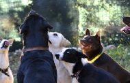 Në Prizren protestohet duke mbajtur zi për qentë e vrarë