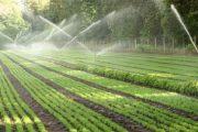 Mbështetje për bujqësi, aplikimi nga 19 mars deri më 30 prill