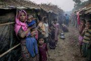 Myslimanët Rohingya, popull mes ferrit dhe parajsës