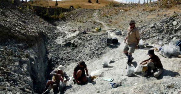Zbulohet fosili gjigant i lakuriqit të natës në Zelandën e Re, ecte edhe me këmbë