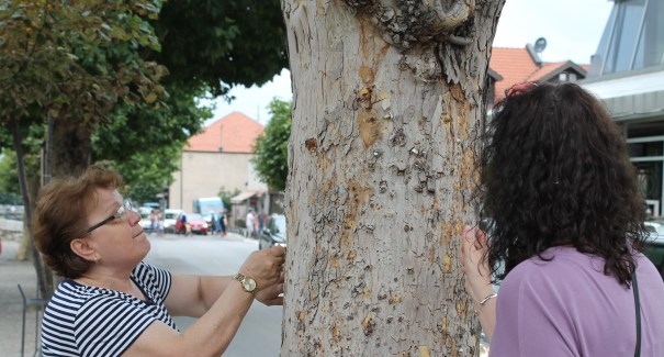 Prizren: Drunj të pastër