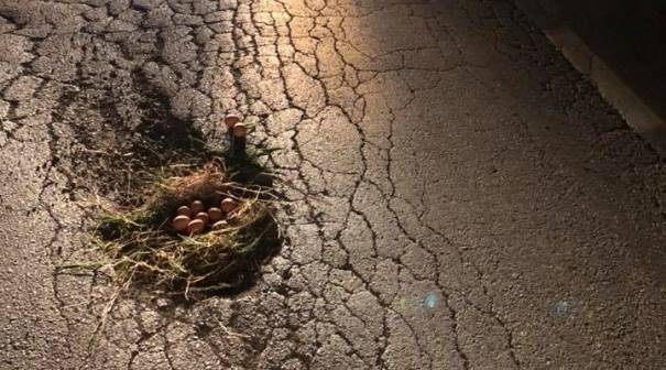 E pazakont: Në rrugën Prizren-Dragash gjenden disa vezë! [Foto]