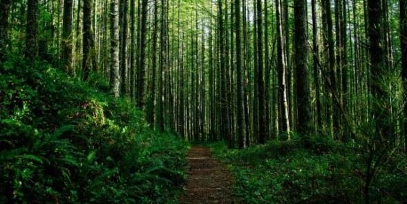 Prizren: Deklarohen të pafajshëm rojet e pyllit që akuzohen për marrje të ryshfetit