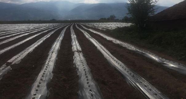 1.5 milionë euro dëme në bujqësi nga shiu dhe erërat e forta në Mamushë