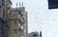 Hodhi 25 mijë euro nga ballkoni, arrestohet autori