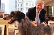 Trump, presidenti i parë pa një qen në Shtëpinë e Bardhë