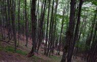 Suharekë: Kanoset roja e pyllit, tentoi t'i fotografojë dëmtuesit e pyllit