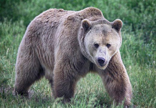 Vrasja e ariut të Prizrenit, Agjencia Pyjore thotë se vendimi është keqinterpretuar