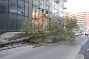 Era e fortë shkuli një dru në qendër të Prizrenit