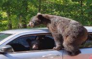 Arinjtë hynë në makinë pasi pronari i harroi dritaret hapur