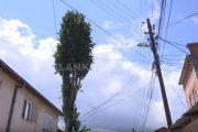 Plepi shqetëson banorët e një lagjeje në Prizren (VIDEO)