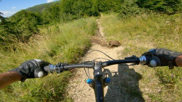 Biçiklistët nga Suhareka ballafaqohen me ariun në Malet e Sharrit