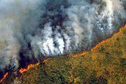 Pylli tropikal i Amazonës po digjet, lexoni çfarë do të thotë kjo për botën