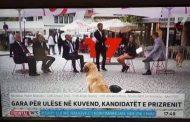 Prizren/ Gjatë debatit politik, qentë futen në skenë